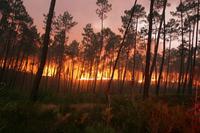 incendio-ourem-7.jpg