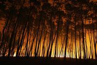 incendio-ourem-9.jpg